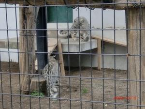 Zoo_039