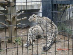 Zoo_041_4